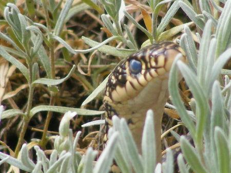 snake_022