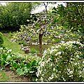Un arbre tarabiscoté