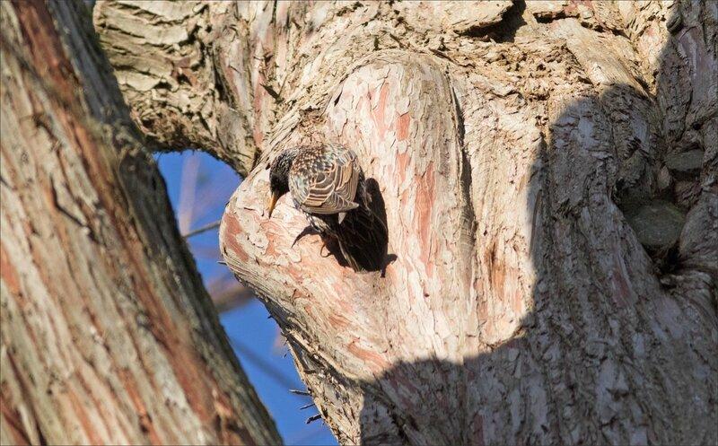 Ville arbre oiseau étourneau loge ym 2 1