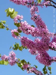 jardin_avril_1