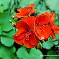 Fleur de septembre