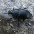 Entomologie en haute-garonne (2)