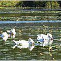Lac Cygnes 0110157