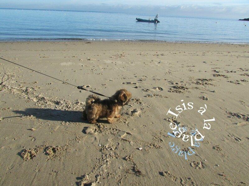 Saint Malo Isis à la plage janvier 2014-11 007