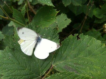 mme papillon assaut10