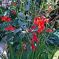 CROCOSMIAS 1