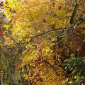 couleurs d'automne