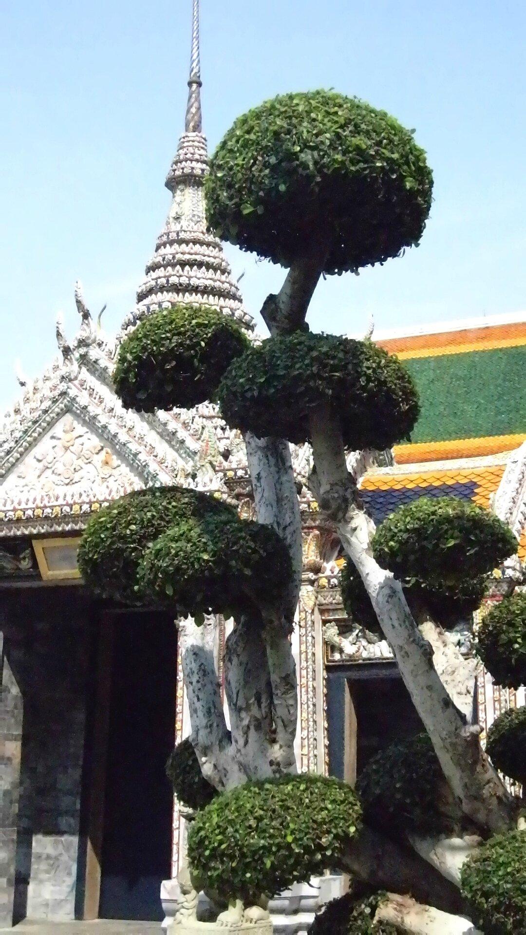 BANGKOK_Palais Imperial bonsaï