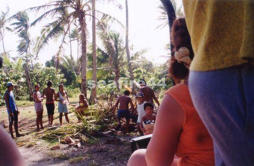 32_récolte de coeurs de palmiers