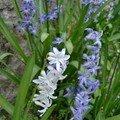 Fleur 3 mars 2007 001