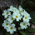 C'est le printemps dans le jardin.