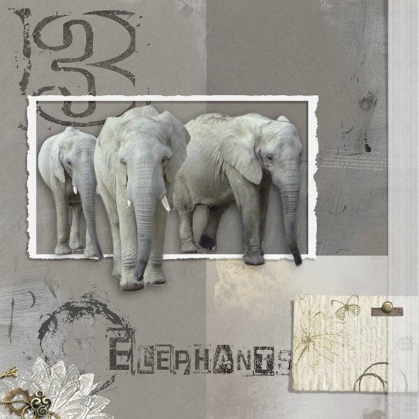 15-05 elephants