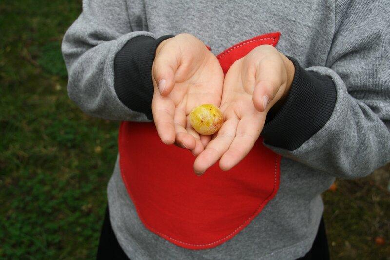 des pommes 025