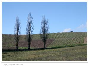3_arbres_sans_polarisant