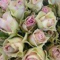 0219 - Marché aux fleurs Prado 8 février