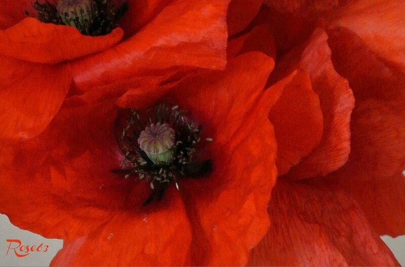 Le bouquet de Maxime offert en ce dimanche 5 juin2016