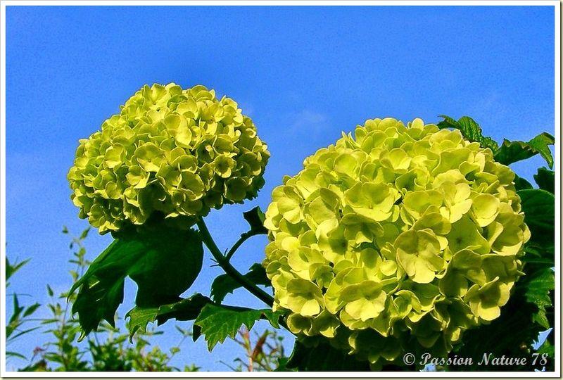 Mon jardin sous un autre angle (12)