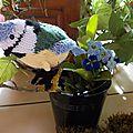 Une mésange bleue avec fleur de bourrache