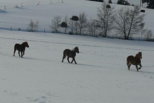2008 12 30 Trois chevaux