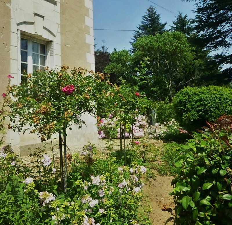 Roses au temps d'été