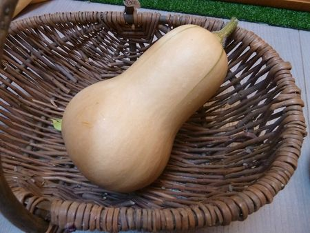 courges butternut (4)