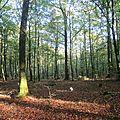 Pendant ce temps dans la forêt