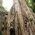 thailand chang mai cambodge kohchang 441