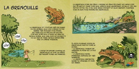 grenouille_72