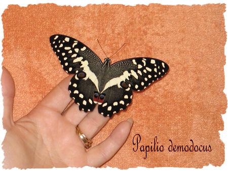 demodocus