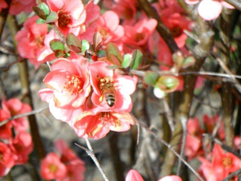 fleurs gréoux 4