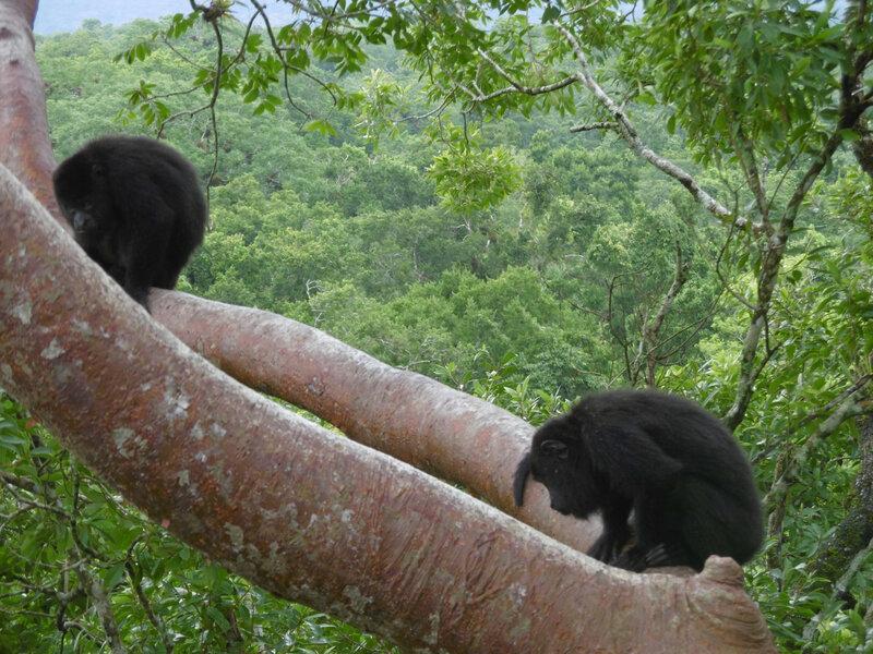 Site Tikal-singes Mono Arana (43)