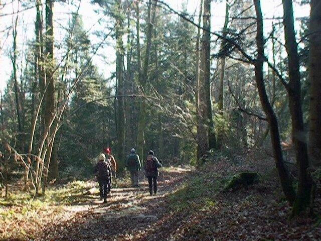 Forêt de Rochatay