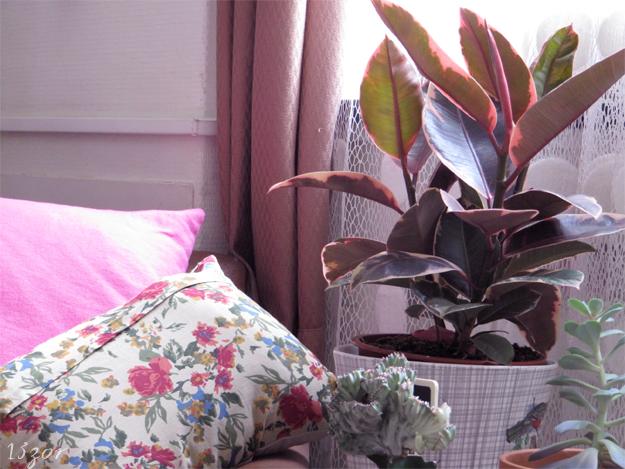 13zor_interieur_bruxelles_plantes_couleurs_3