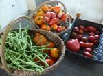 16-haricots tomates
