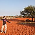nol dune du kalahari