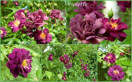 2violette