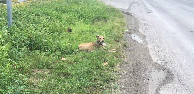 chienne et chiot en bord de route