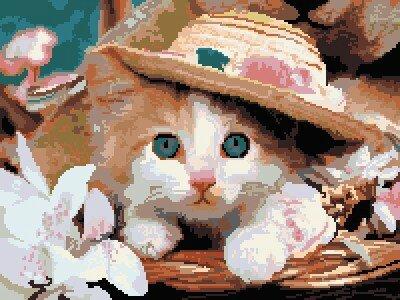 chaton chapeau grille pt