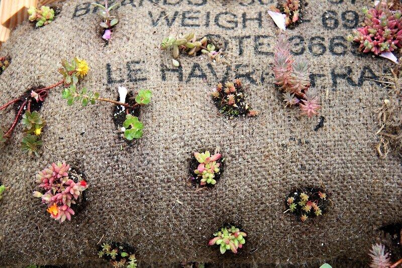 8-Bretagne-Vannes - Jardins éphémères_6733