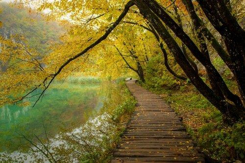 foret lac automne