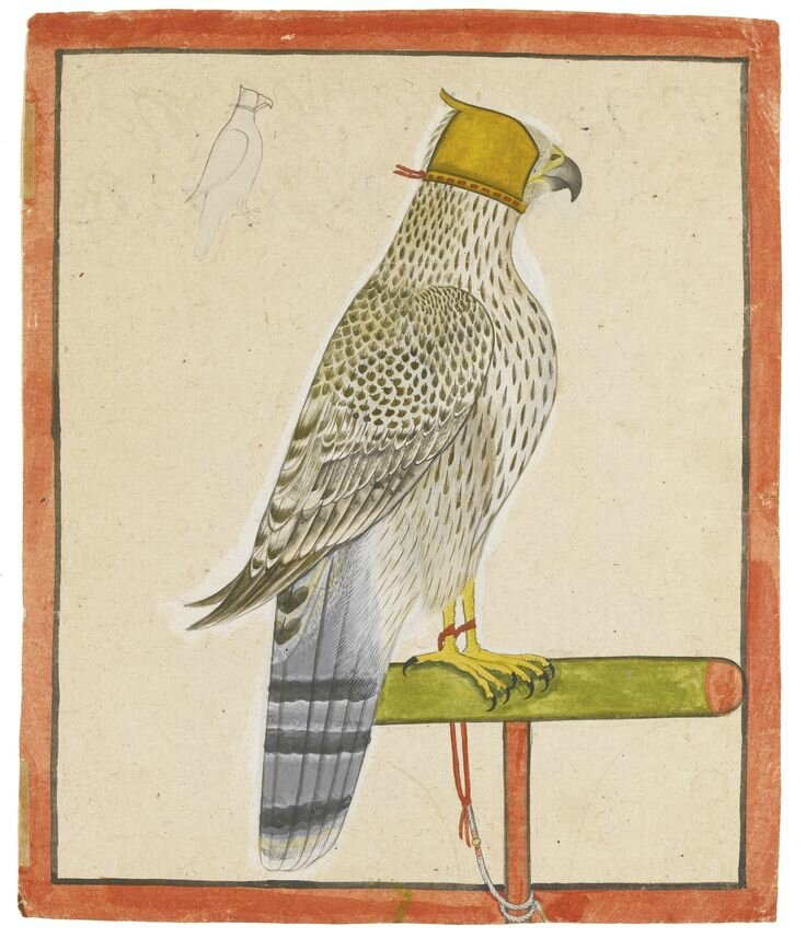 A favourite falcon of Raja Balwant Singh of Jasrota, attributed to Nainsukh of Guler, Jasrota, dated 1737