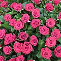 Les roses de jean pierre et 24 heures photo