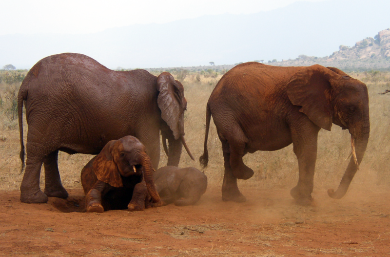 ELEPHANTS DANS LE PARC NATIONAL DU TSAVO