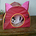 Vacances pour les chats des 3 zones !!