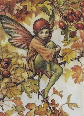 The_Hawthorn_Fairy