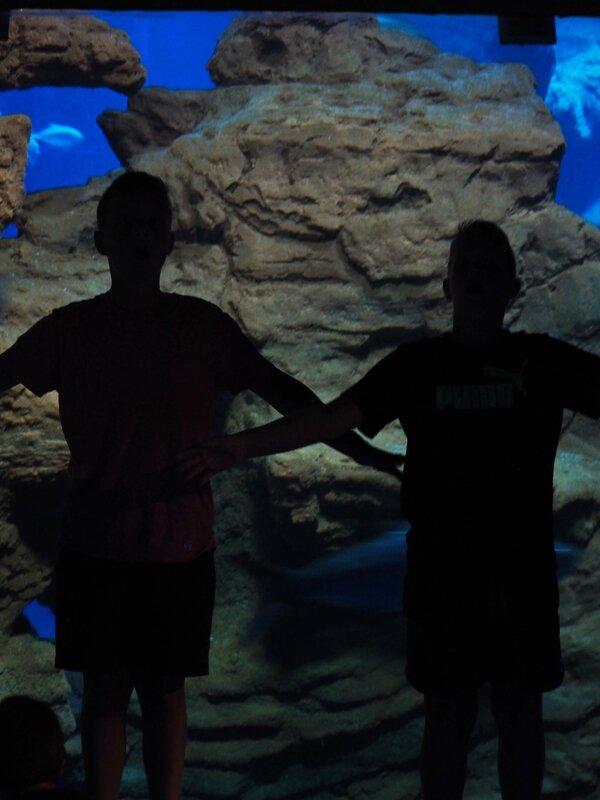 4-aquarium-odysseum-mare-nostrum-montpellier-ma-rue-bric-a-brac