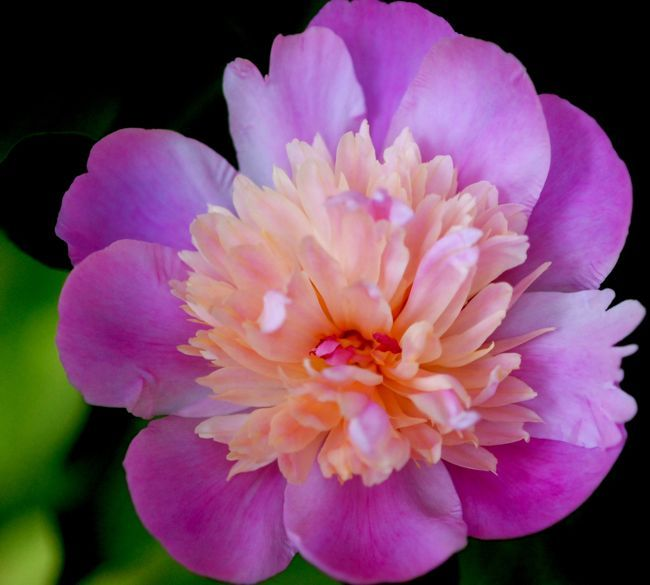 Fleur___356