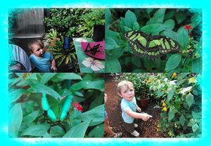 jardin papillon4