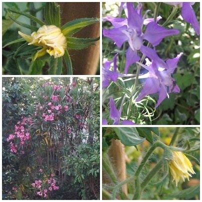Fleurs du jardin (6)