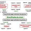 Schéma du chapitre 2: la diversification des êtres vivants